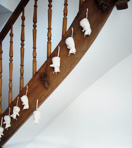 rats suspendus