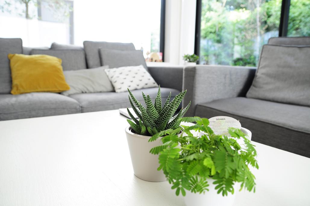 plantes-salon