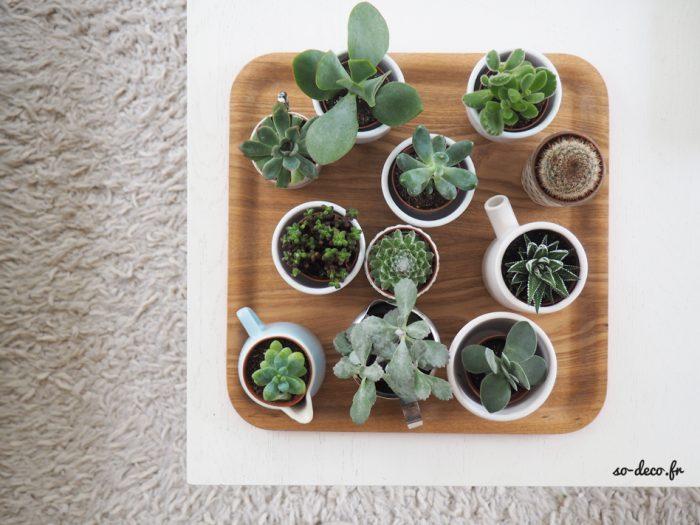 plantes-dans-jolis-pots