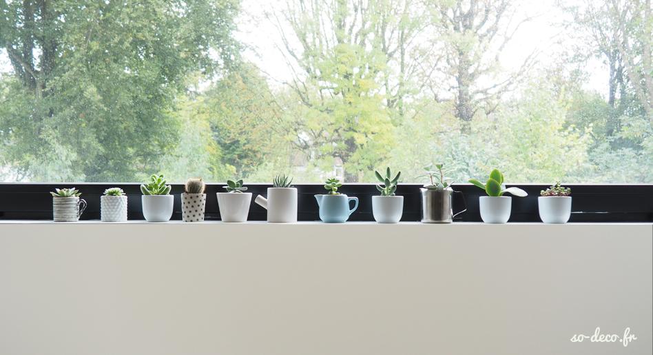 plantes-succulente