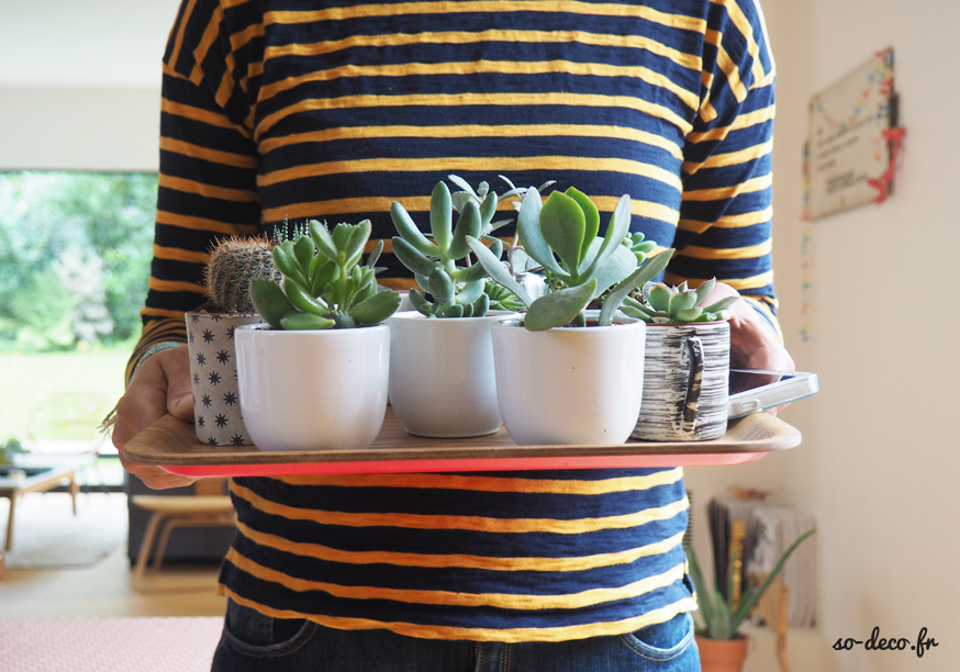 tendance-plantes