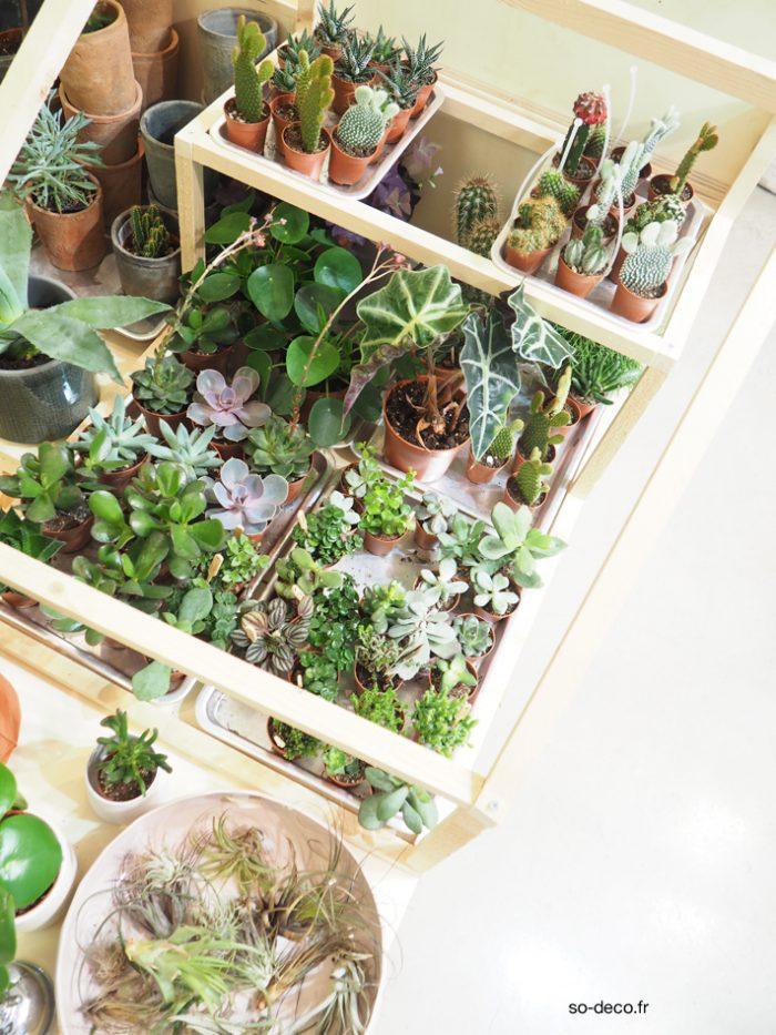 plantes-tendance